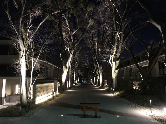 闇夜に浮かぶ『下鴨糺の杜』新築分譲マンション