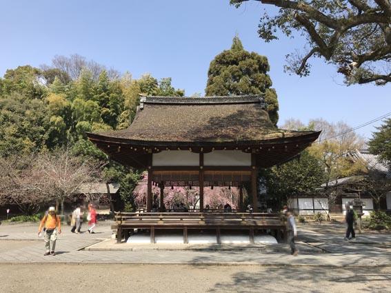 桜満開の『平野神社』とローレルコート京都北野