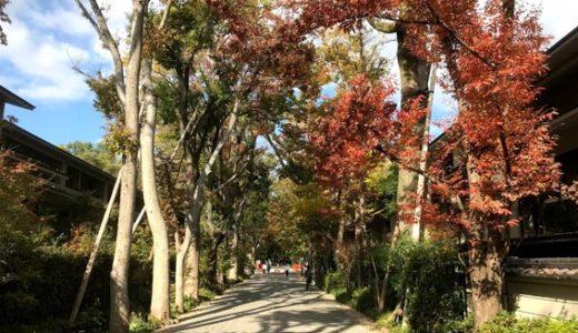 秋の参道 『J.GRAN THE HONOR 下鴨糺の杜』