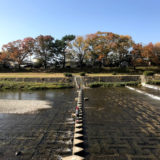 1週間前の賀茂川と御所の紅葉