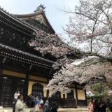 平安神宮、南禅寺、智水庵、疎水、蹴上、桜、菊水、ブルーボトルコーヒ—、不動産、他