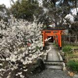 平野神社・3月12日の桜