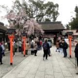 平野神社の桜と「めん馬鹿一代」と二条城