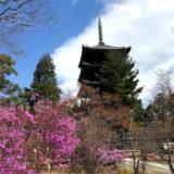 桜の仁和寺、1泊100万円の宿坊『松林庵』の価値