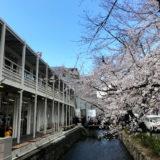 木屋町通の桜とヒューリック『(仮称)ザ・ゲート立誠京都』