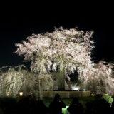 木屋町通と花見小路と祇園白川と円山公園と桜ライトアップ