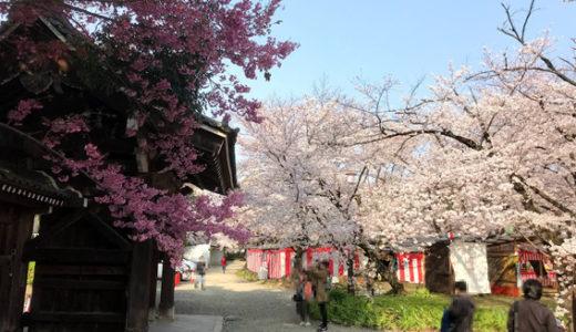 平野神社 桜 満開