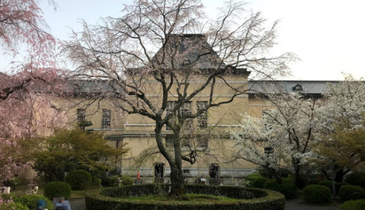 京都府庁の桜と文化庁移転工事と『京都府警察本部新庁舎』建設状況
