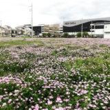 イオンモール京都桂川とレンゲ畑