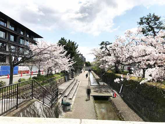 『第12回堀川さくら祭り中止』とHOTEL THE MITSUI KYOTO(ホテル ザ 三井 京都)